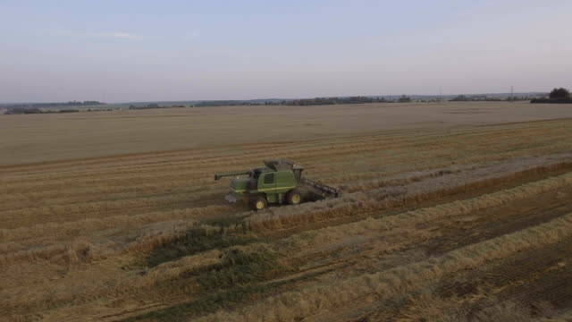 Aerial view combine harvesting a field of wheat video