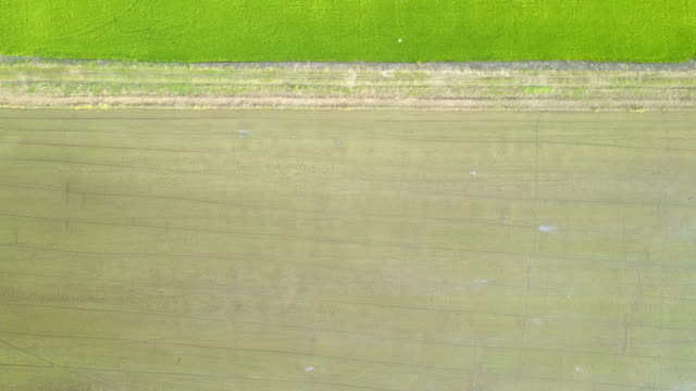 Aerial view  field paddy video