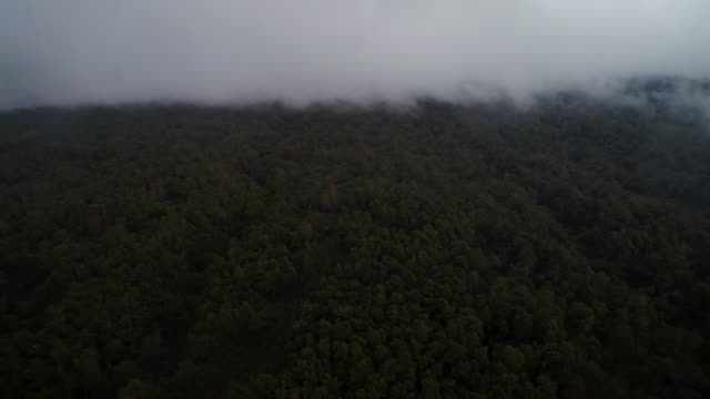 Aerial View Flying Over Forest with Clouds and Low Fog video