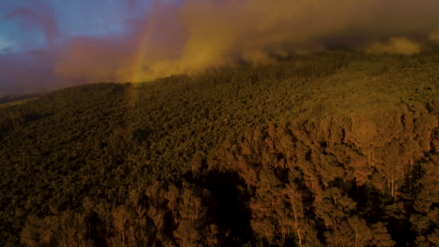 Aerial View Flying Over Forest With Rainbow video