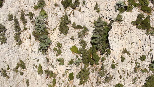 Aerial View – Flying Over Rocky Mountains with Trees video