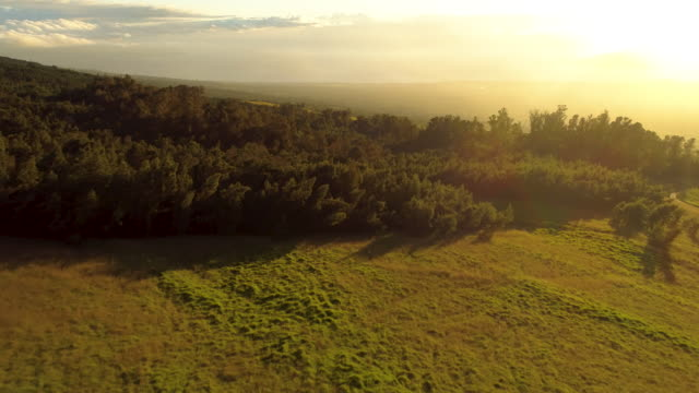 Aerial View Flying Over Sunny Forest at Sunset video