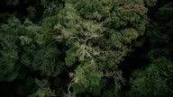 Aerial View. Flying over the beautiful forest trees. Aerial camera shot. Landscape panorama. video