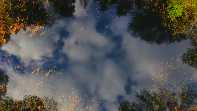 Aerial View. Flying over the forest lake. Aerial drone shot video
