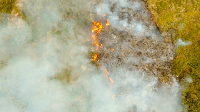 Aerial view Forest fire. Busuanga, Palawan, Philippines video