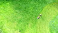 Aerial View Grass Trimming Lawnmower video