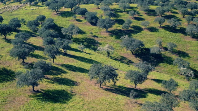 Aerial View Green Rural Landscape video