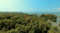 Aerial View: Mangrove forest in Chonburi province, Thailand. video