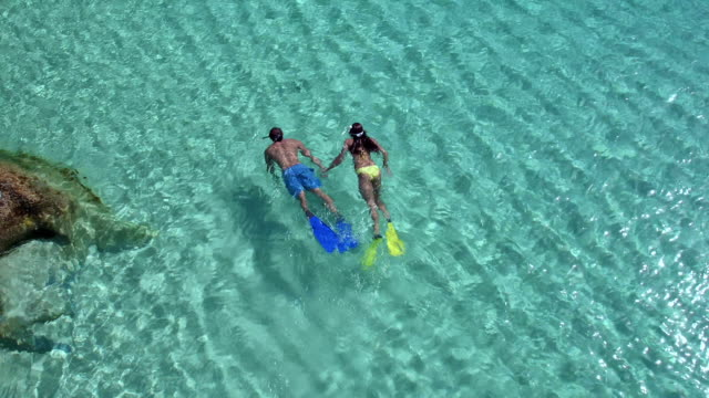 Aerial view of a couple snorkeling from a tropical beach video