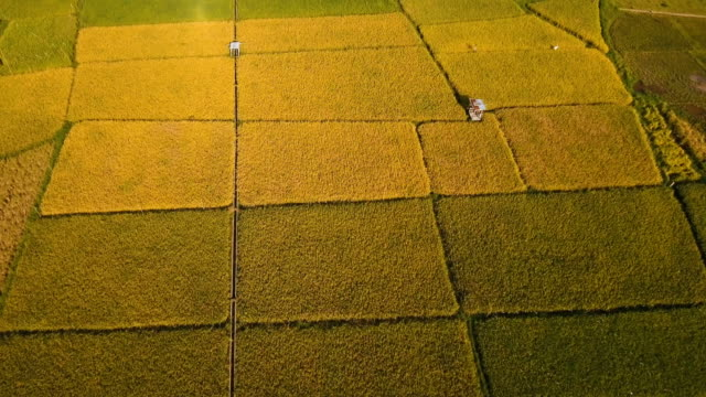 Aerial view of a rice field. Philippines video