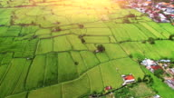 Aerial view of a village with rice field video
