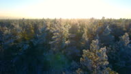 Aerial view of a winter forest. video