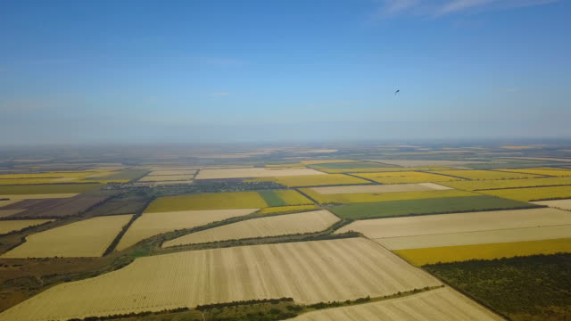 Aerial View Of Agricultural Fields Crops Harvest, Yellow Agricultural Plantations Drone Shot video