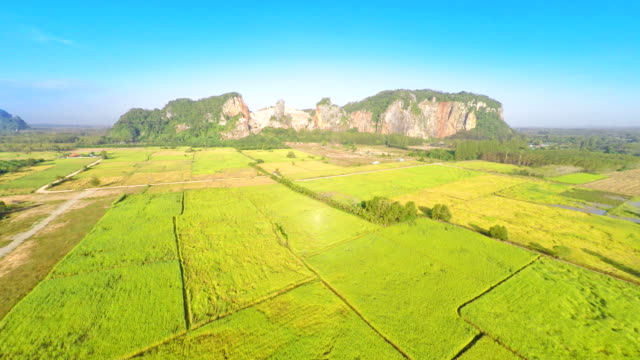 aerial view of agriculture area video