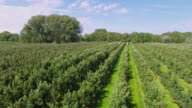 Aerial view of apple plantation in ' Altes Land ' near Hamburg, Germany video