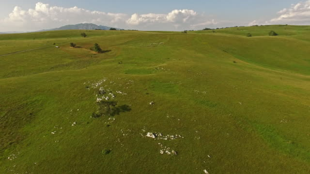 Aerial view of beautiful grassy landscape with trees video