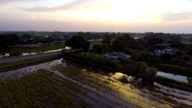 Aerial view of Beautiful Rice Farm and Irrigation Canals with Sunlight Reflection in Evening. video