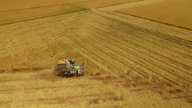 Aerial view of combine on harvest field in Ayutthaya, Thailand video