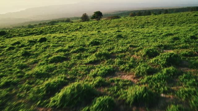 Aerial View of Countryside at Sunset video