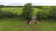Aerial view of cows going from one field to another video