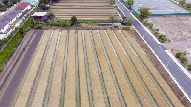 Aerial view of cultivated field video