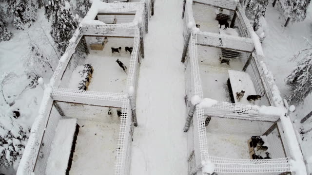 Aerial view of dogs in cages on winter day video