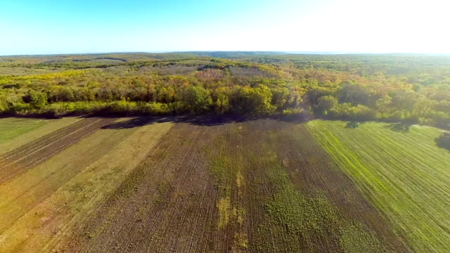 Aerial view of field and forest video