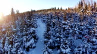 Aerial View of Forest and Path video