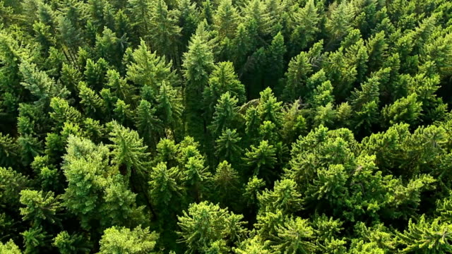 Aerial view of forest. Part2 video