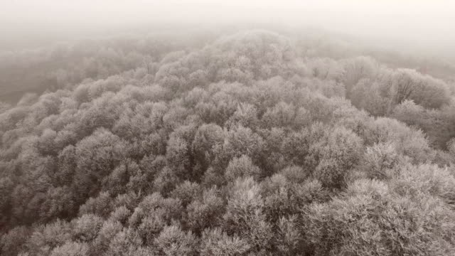 Aerial view of frozen forest video