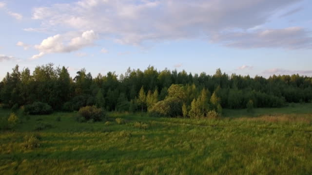 Aerial view of green forest with different trees, grass field against blue sky in daylight video