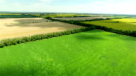 Aerial view of harvest field landscape video