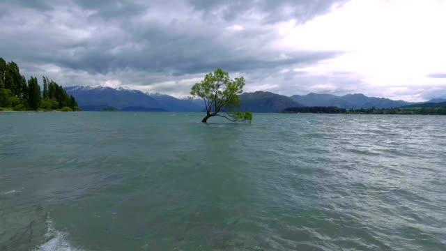 Aerial View of Lake Wanaka and Lone Tree, Landmark of Wanaka, New Zealand video
