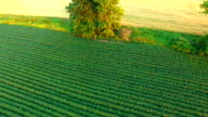 Aerial View of Lush Farm Fields, Soybean, Wheat, Corn video