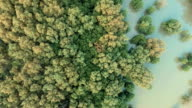 Aerial View of mangrove forest and limestone cliff video