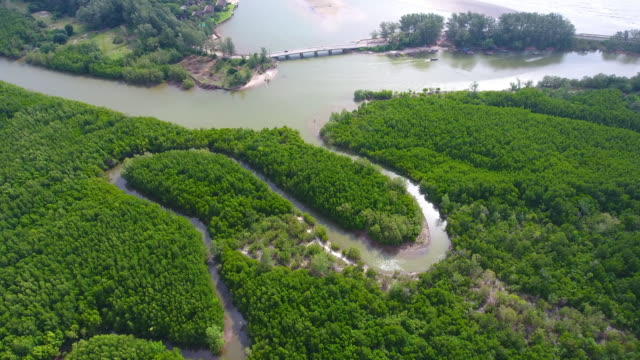 Aerial view of mangrove forest and sea at trang province, Thailand , video