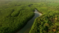 Aerial view of mangrove forest in Thailand video