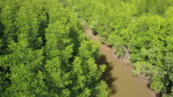 Aerial view of mangrove tree forest and river at Ranong, Thailand video