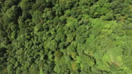 Aerial view of rainforest video