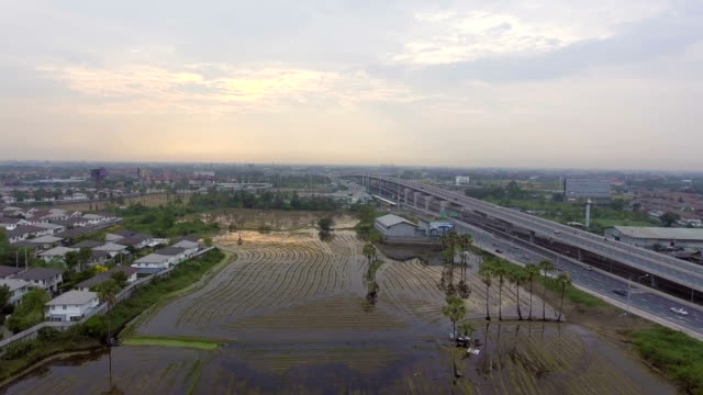 Aerial view of Rice farm cover by water near a highway and residental area video