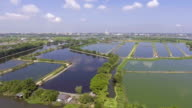 Aerial view of Rice farm with Water in preparing phase video