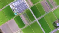 Aerial view of rice field in summer video