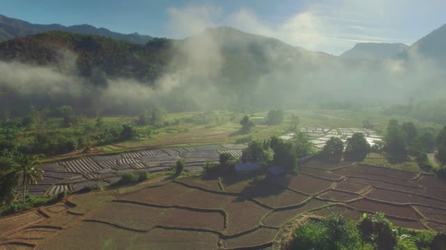 Aerial view of rice paddy fields,Maehongson Province video