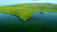 Aerial view of Sub tropical flora and fauna, Southern Florida video