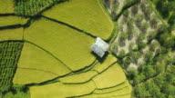 Aerial view of terraced field in Kullu valley, Himachal Pradesh, India video