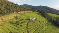Aerial view of Terraced Paddy Fields video