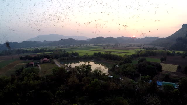 Aerial view of the flight begins from the bat's cave video