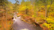 Aerial view of the forest with a river video