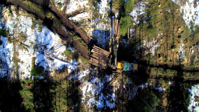 Aerial view of the logs on the piling up video