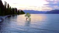 Aerial view of The Wanaka Tree, Lake Wanaka, Newzealand video